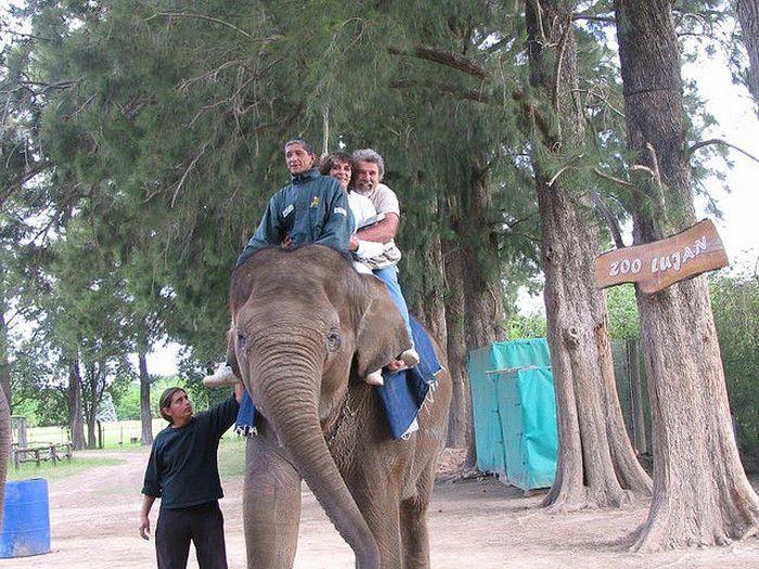 Extreme Petting Zoo (38 pics)