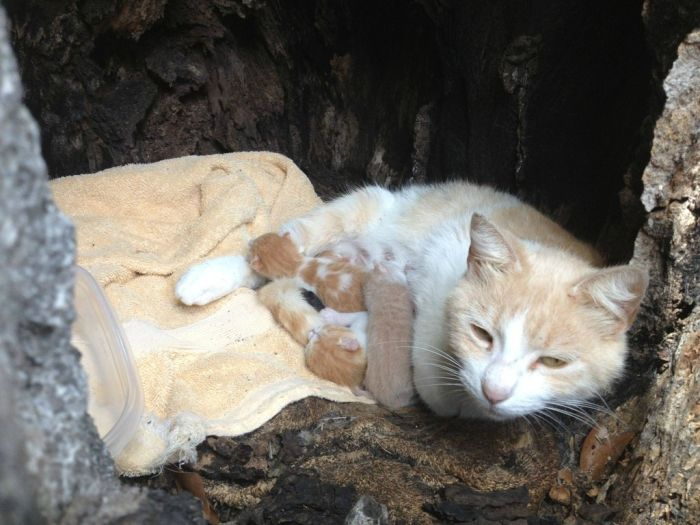 Pregnant Cat Was Missing (3 pics)
