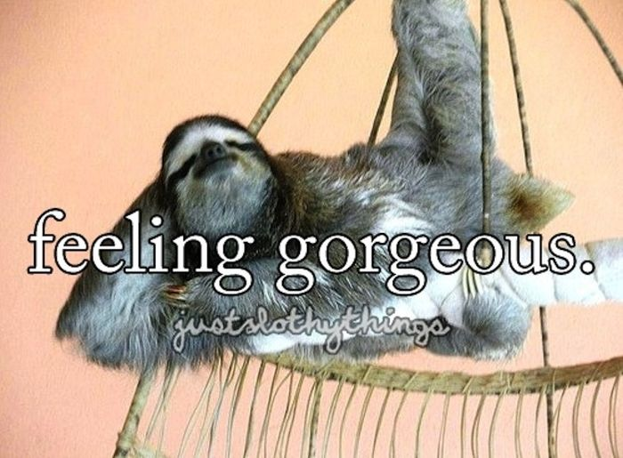 What It's Like to Be a Sloth (28 pics)