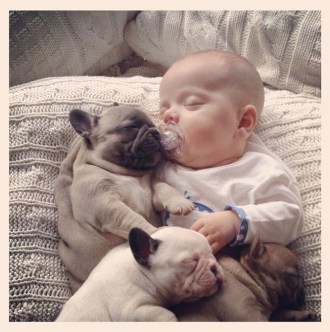 Baby with Bulldog Puppies (11 pics)