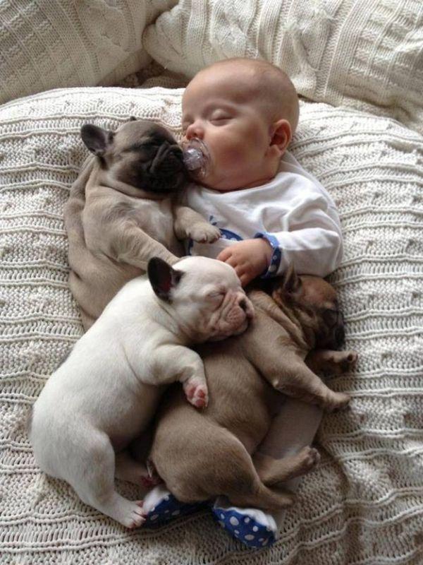 Baby with Bulldog Puppies (11 pics)