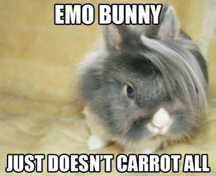 Funny Captions. Part 3 (31 pics)