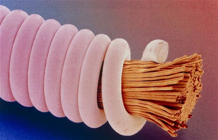 Everyday Items under a Microscope (27 pics)