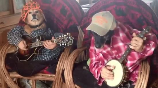 Hilarious Dog Guitar Band