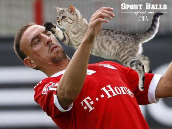 Sports Balls Replaced With Cats (20 pics)