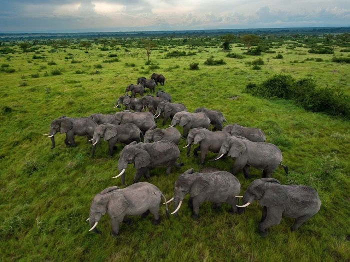 Welcome to Africa (30 pics)