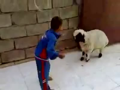 Little Kid vs Baby Sheep