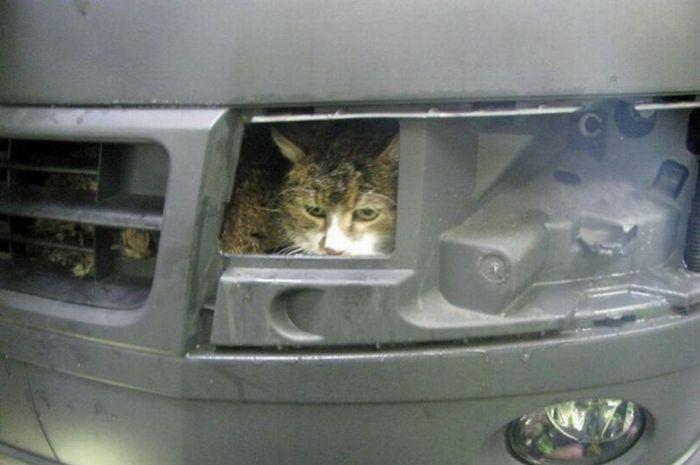 Cat at the Car Wash (4 pics)