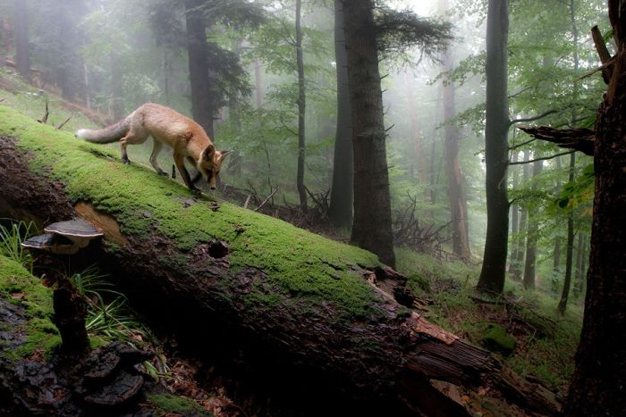 Beautiful Animal Pictures (90 pics)