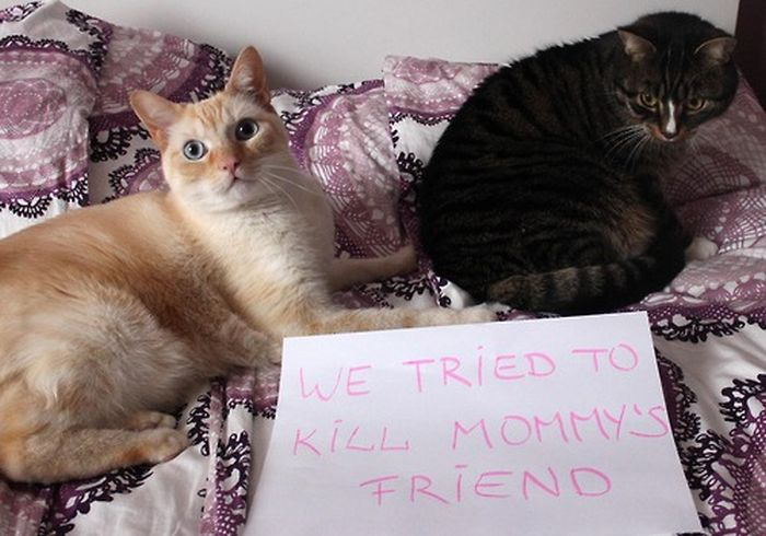 Cat Shaming. Part 2 (40 pics)