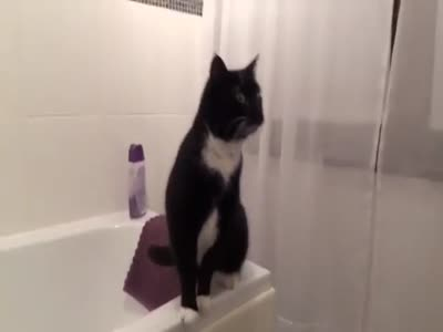 When Your Cat Doesn't Want to Take a Bath