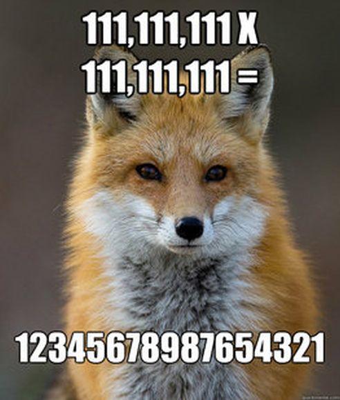 Fun Fact Fox Meme (60 pics)