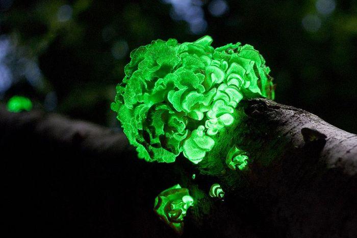 Great Looking Fungi (15 pics)