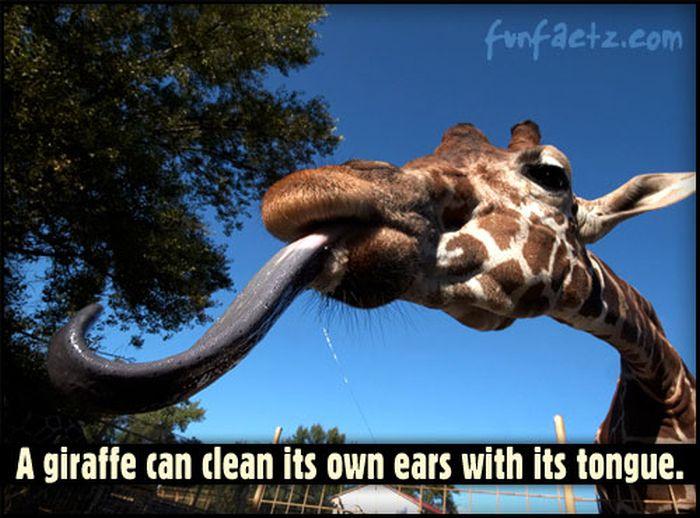 Fun Facts (50 pics)