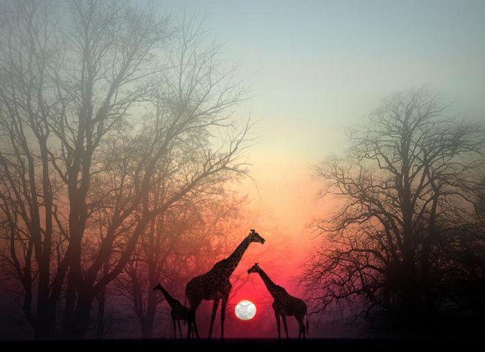 Beautiful Images (66 pics)
