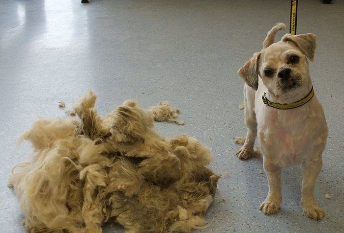 Abandoned Dog Gets a Haircut (7 pics)