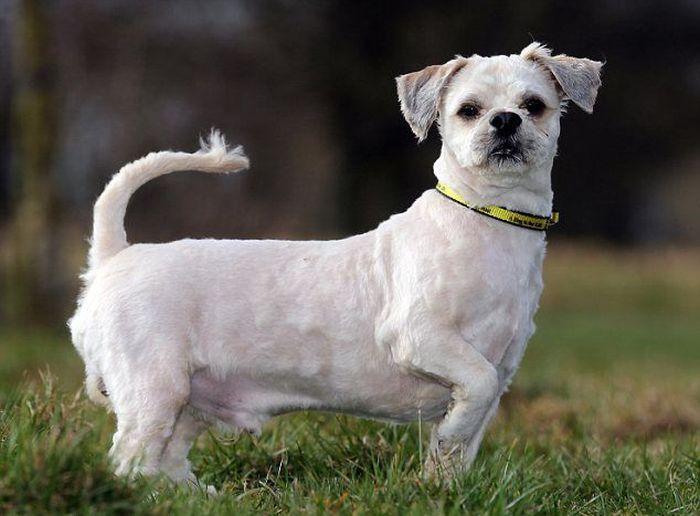 Abandoned Dog Gets a Haircut (7 pics)