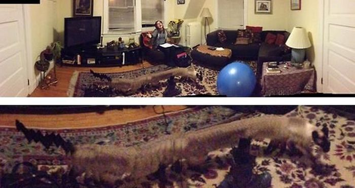 Panoramic Photo Fails (25 pics)
