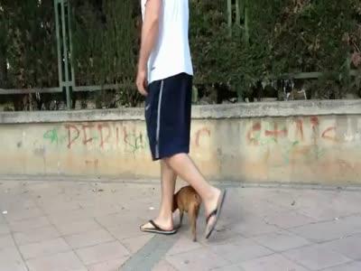 Amazing Dog Showing Tricks Performance