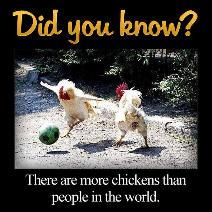 Fun Facts. Part 3 (42 pics)