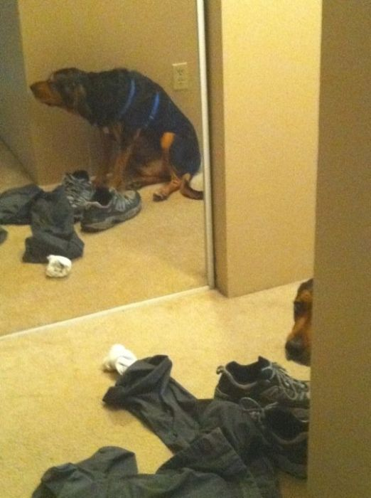 These Dogs Suck At Hide-And-Seek (38 pics)