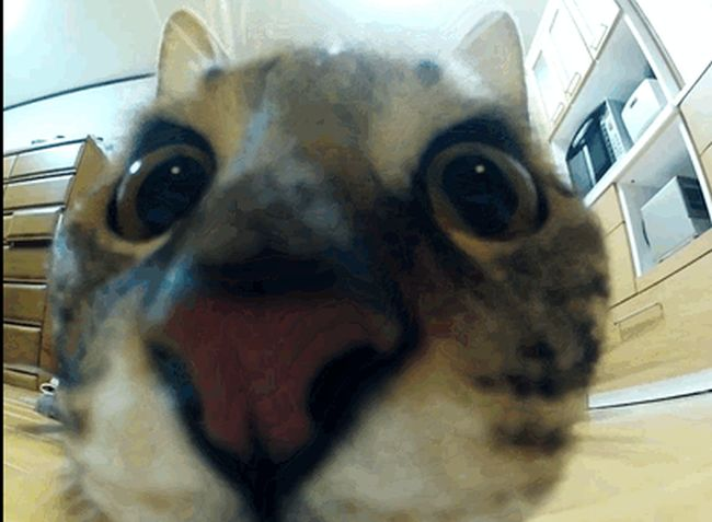 Funny Cat GIFs (30 gifs)