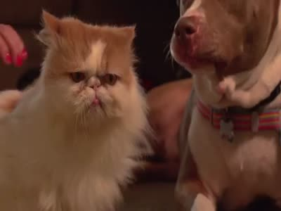 The Slow Motion Cat vs Dog Battle