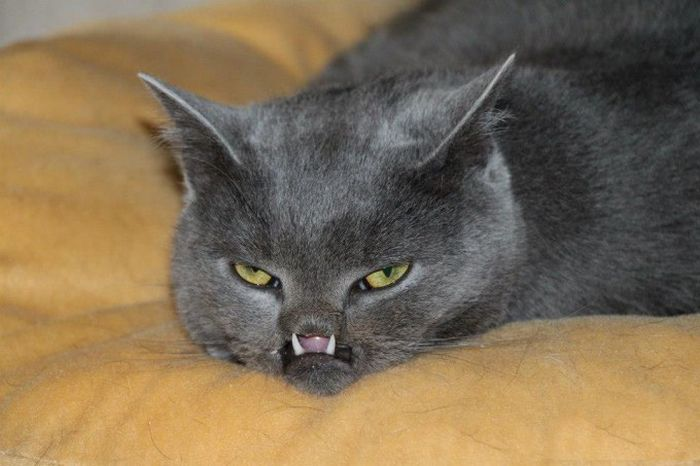 Cat Has Unusual Teeth (7 pics)