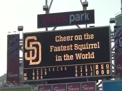 The Fastest Squirrel in The World