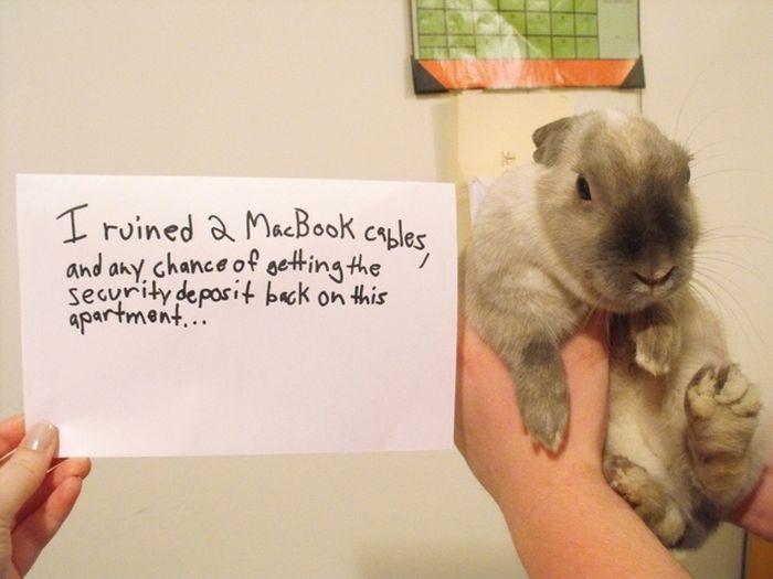 Bunny Shaming (22 pics)