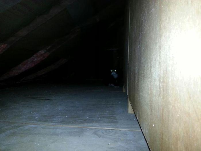 Entombed Cat (9 pics)