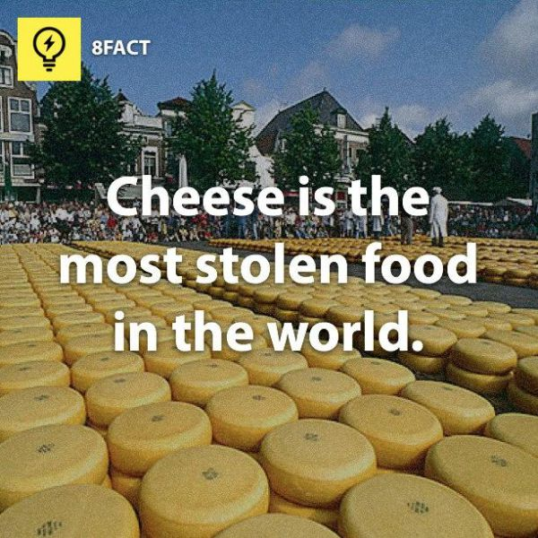 Totally Useless Facts (25 pics)