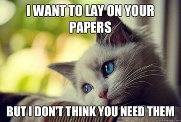 First World Problems Cat (60 pics)