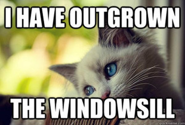 First World Problems Cat (60 pics)