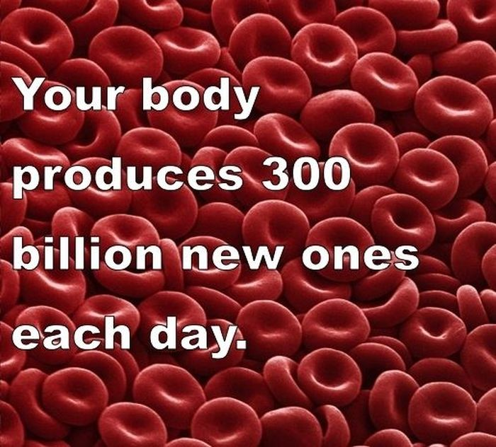 Interesting Facts about You and Your Body (22 pics)