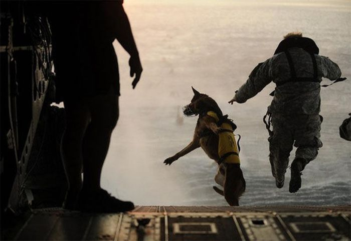 Awesome Photos. Part 25 (49 pics)