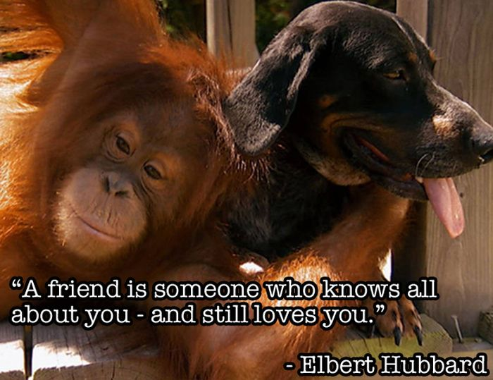 Friendship Quotes (20 pics)