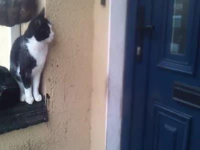Cat Opens a Door