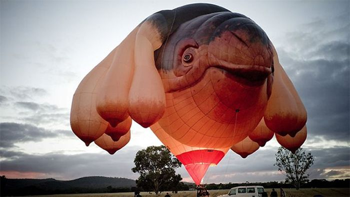 Meet the Skywhale (15 pics)
