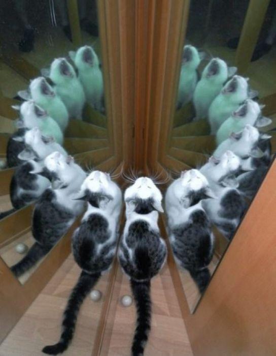 Acid Picdump (111 pics)