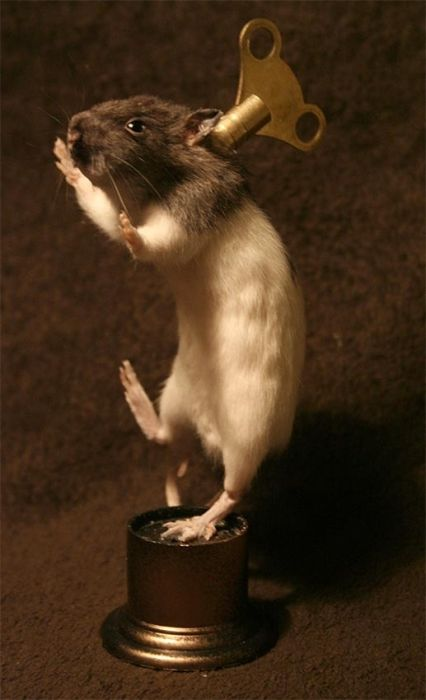 Scary Taxidermied Animals (40 pics)
