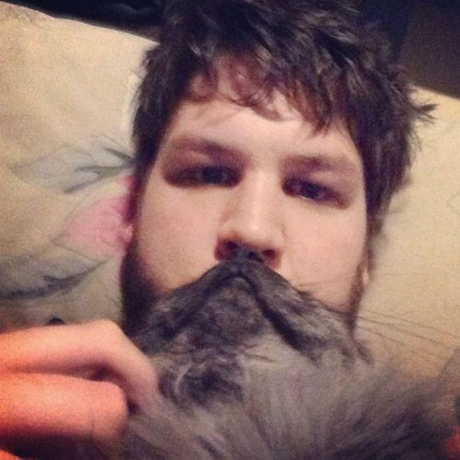 Cat Beards (25 pics)