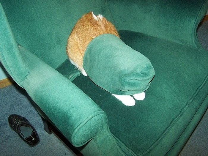 Cats Who Failed At Hide-And-Seek (39 pics)