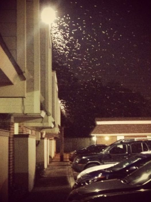 Termite Swarm in New Orleans (29 pics)
