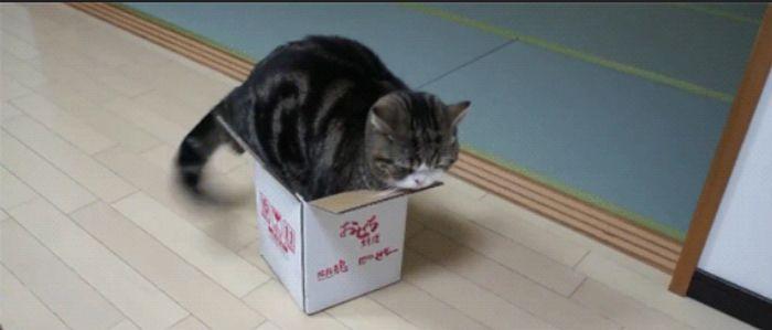 Cute Cat Gifs (32 pics)