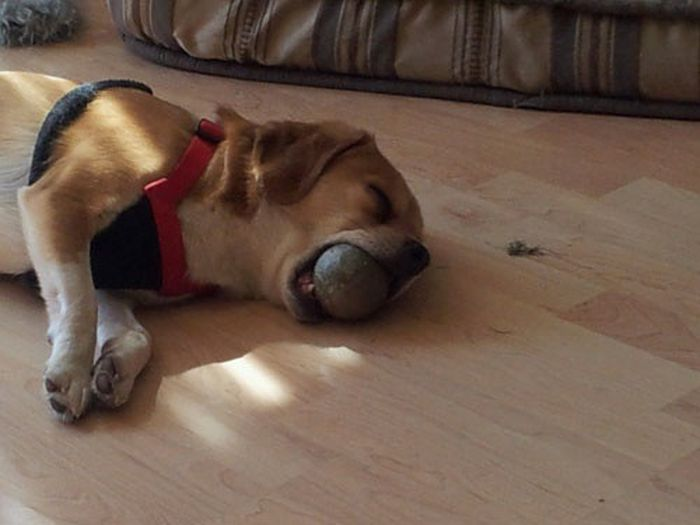 Funny and Cute Dog Photos (47 pics)