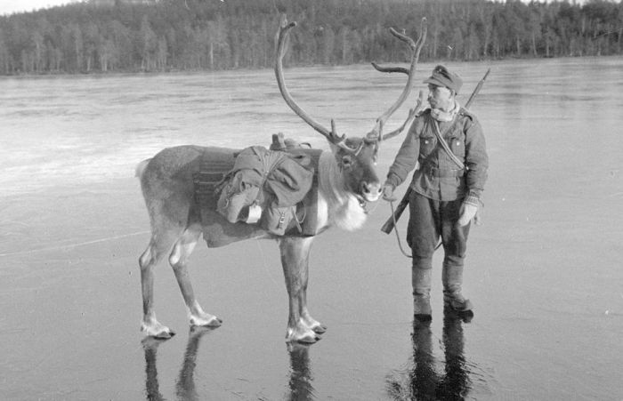 Finland in World War II (49 pics)
