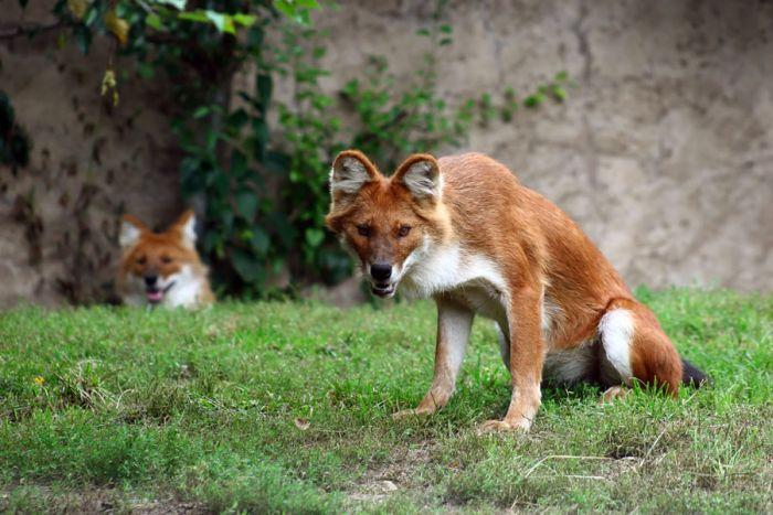 Rare and Strange Animals (30 pics)