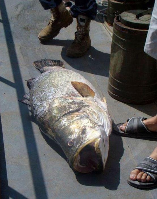 Big Catches (35 pics)