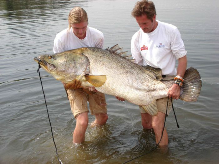 Big Catches (35 pics)
